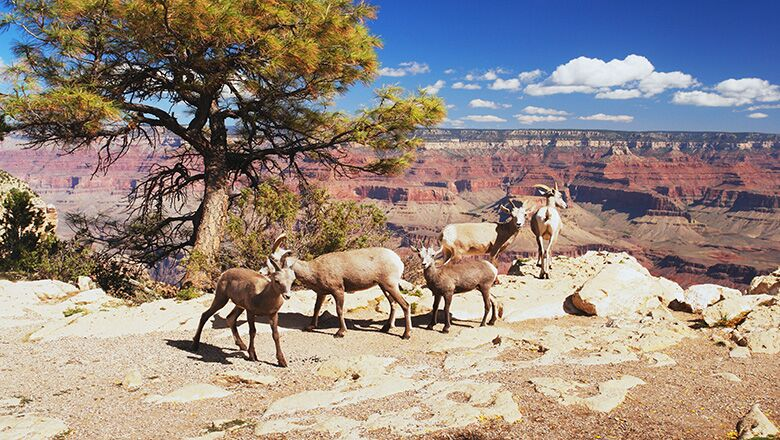 A Las Vegas to Grand Canyon Tour Gives You a Chance to See All Types of Sights