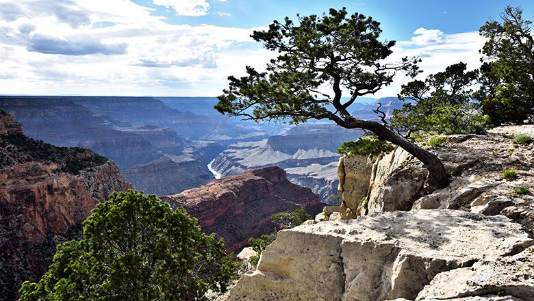 See Animals in Grand Canyon By Scheduling A Vegas Day Trip