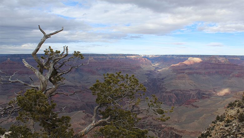 Grand Canyon Tour Service in Las Vegas | Taking A Bus To The Canyon