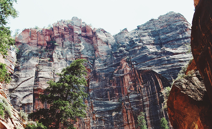 View upward to a cliff in Zion from the canyon floor